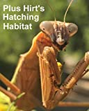 Carolina Praying Mantis 2 Egg Cases 100-400 Babies with Hirt's Hatching Habitat