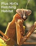 Carolina Praying Mantis 2 Egg Cases 100 - 400 Babies with Hirt's Hatching Habitat