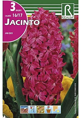 Bulbos de jacinto jan bos (bolsa 3 bulbos) Rocalba
