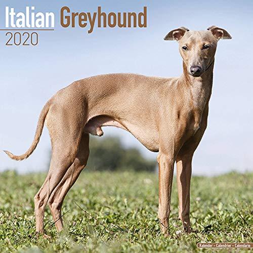 Italian Greyhound Calendar 2020 - Dog Breed Calendar - Wall Calendar 2019-2020 ()