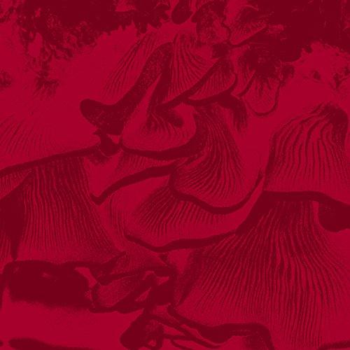 MAURIZIO ABATE - Live at Elastico