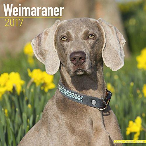Weimaraner Calendar 2017 - Dog Breed Calendar - Wall Calendar 2016-2017