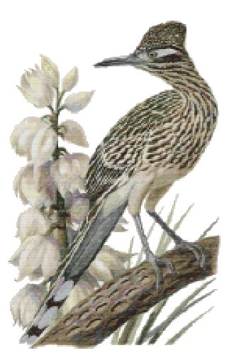 New Mexico State Bird (Great Roadrunner) and Flower (Yucca Flower) Counted Cross Stitch Pattern