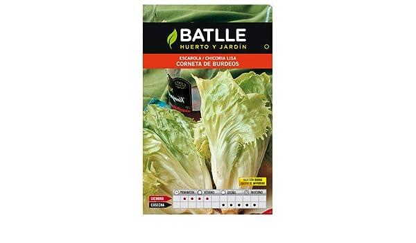 Portal Cool Paquete de semillas: Vegetable Seeds Batlle - endivias ...