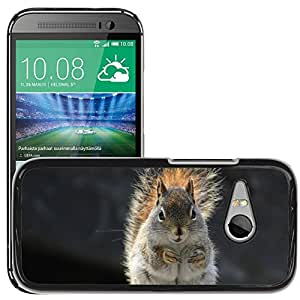Hot Style Cell Phone PC Hard Case Cover // M00110380 Squirrel Animal Nature Wild Wildlife // HTC One Mini 2 / M8 MINI / (Not Fits M8)