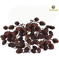 SunGrow 30 Naturally Grown, Pesticide-Free Mini Alder Cones for Shrimps - Lowers pH Level, Fight Bacteria and Prevent Fungal Infections in Aquatic Environment - Perfect for Both Big & Small Aquariums