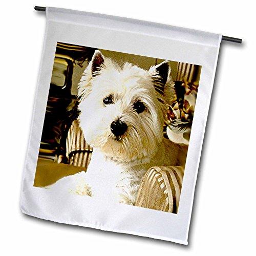 West Highland Blanket (Dogs West Highland Terrier - Westie - 12 x 18 inch Garden Flag (fl_609_1))