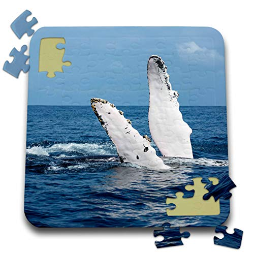 3dRose Danita Delimont - Whales - A Humpback Whale Floats on its Back, Silver Bank, Dominican Republic - 10x10 Inch Puzzle (pzl_312990_2)