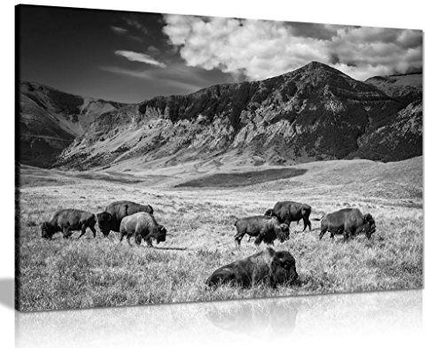 (Black & White Wall Art Buffalo Grazing Mountain Landscape Canvas Wall Art Picture Print (24x16))