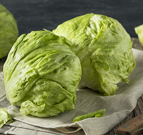 Sweet Yards Seed Co. Organic Iceberg Lettuce Seeds 'Crispino' - Over 300 Open Pollinated Non-GMO Seeds