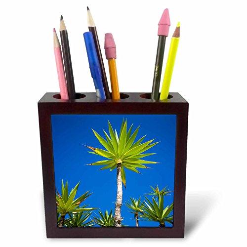 3dRose Danita Delimont - Trees - Spain, Canary Islands, Lanzarote, Tahiche, garden - 5 inch tile pen holder (ph_257883_1) by 3dRose