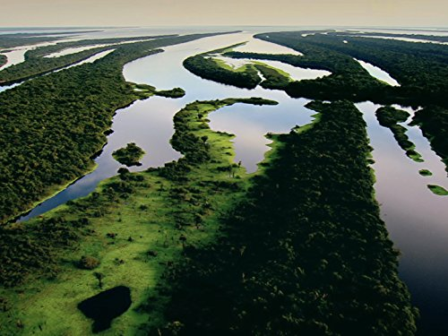 Amazon River Islands: The Floating - Floating Vines