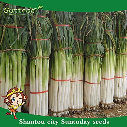 Portal Cool 200Pcs: Suntoday Chinese Scallion Onion Leek Oriental Garlic Chive Allium Seeds 200Pcs