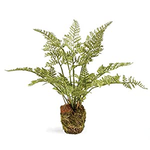"CONSERVATORY SOFT FERN DROP-IN 8.5"" 40"