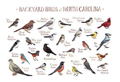 North Carolina Travel Guide Amazon