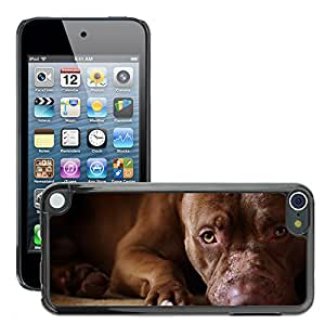 Hot Style Cell Phone PC Hard Case Cover // M00046148 animals pets dog sadness // Apple iPod Touch 5 5G 5th