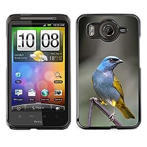 Caucho caso de Shell duro de la cubierta de accesorios de protección BY RAYDREAMMM - HTC G10 - Bird Grey Feather Branch