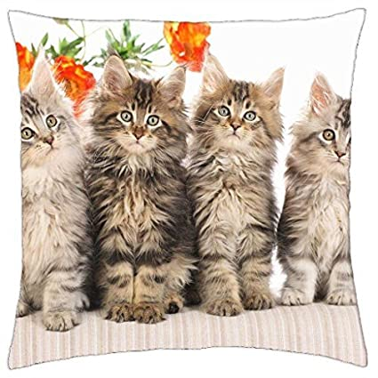 Amazon com: Maine Coon Kittens - Throw Pillow Cover Case (18
