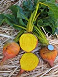 buy Burpee Golden Beet Seeds 2 g ~100 seeds now, new 2018-2017 bestseller, review and Photo, best price $3.03