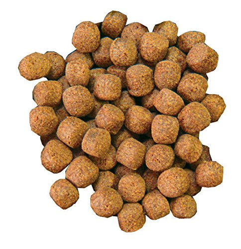 amazon com aquascape premium staple fish food pellets for large