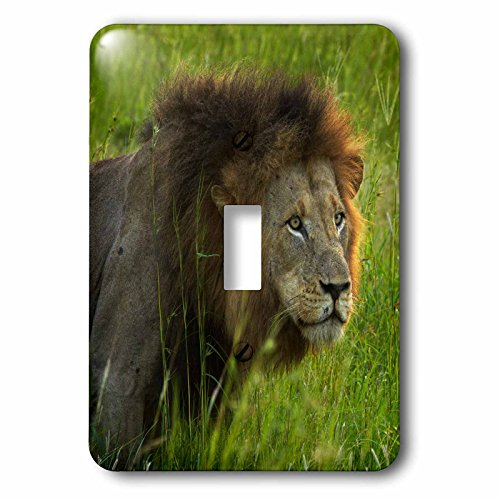 3dRose lsp_187939_1 Male Lion, Panthera Leo, Kruger Np, South Africa Light Switch Cover by 3dRose