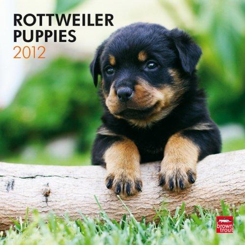 Download Rottweiler Puppies 2012 Square 12X12 Wall Calendar PDF