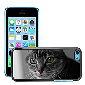 Super Stella Slim PC Hard Case Cover Skin Armor Shell Protection // M00106411 Cat Pet Animal Playful Black Cat // Apple iPhone 5C