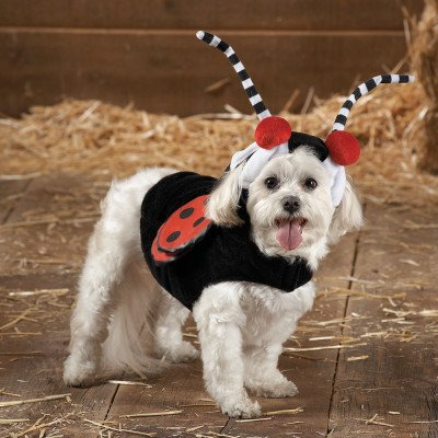 Cat Halloween Costumes Petsmart (Ladybug Dress Up Halloween Dog Costume - Small)