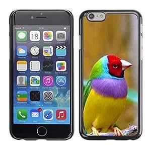 ka ka case unique design personality Bird Ornithology Yellow -iPhone 6 Plus 5.5