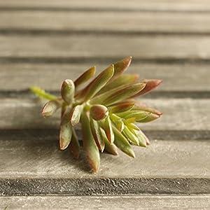Supla 9 Pcs faux succulents unpotted Vinyl Artificial Succulent Galanthus Cactus Plants Artificial Plants 3 Colors fake succulents Flower Arrangement Craft Making 4