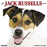 Just Jack Russells 2018 Wall Calendar (Dog Breed Calendar)