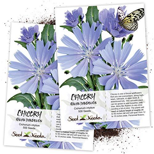 Seed Needs, Chicory/Italian Dandelion (Cichorium intybus) Twin Pack of 500 Seeds Each ()