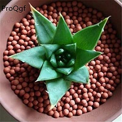Fotcus - 3Pcs A Set Aloe polyphylla Plant - (Color: 3 Aloe polyphylla) : Garden & Outdoor