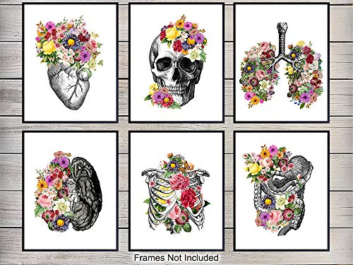 Medical Anatomical Art Set - 8x10 Vintage Floral Anatomy Posters - Retro Wall Decor for Doctors Office, Clinic, Med Student Dorm - Shabby Chic Gift for Nurses, Physicians Assistant PA -Unframed Photos from Yellowbird Art & Design