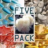 Variety Mushroom Liquid Culture Syringe 5 Pack