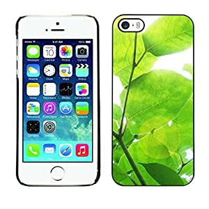 X-ray Impreso colorido protector duro espalda Funda piel de Shell para Apple iPhone 5 / iPhone 5S - Sun Tree Green Nature Spring