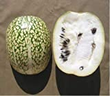 roasted figs - 10 Seeds Shark Fin Melon Chilacayote Fig Leaved Malabar Gourd Heirloom Very Rare