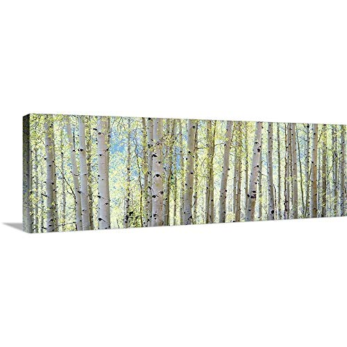 - Aspen Canvas Wall Art Print, 60