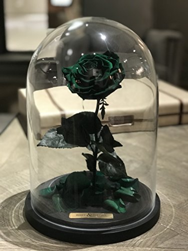 Bella Rose (Forest Green) Fresh Cut Preserved Rose in Glass Cloche. SHE WILL LOVE IT - World's Longest Lasting Roses by Roses & Forever LLC (Image #1)'