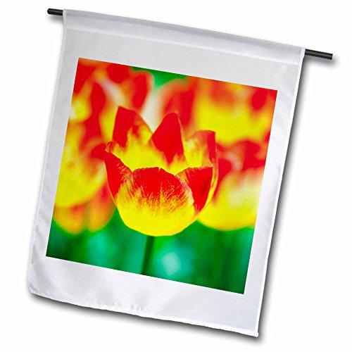3dRose Alexis Photography - Flowers Tulip - Beautiful bowl of a yellow and red tulip flower. Magic of spring - 12 x 18 inch Garden Flag (Tulip Magic)