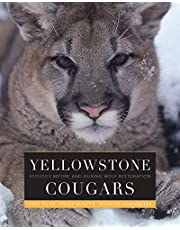 Yellowstone Cougars: Ecology Before and After Wolf Restoration
