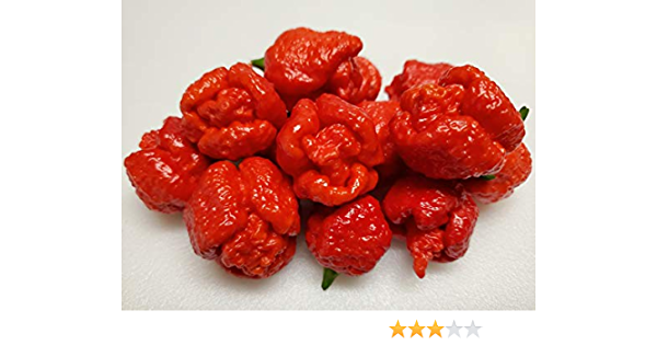 25 Sweet Chocolate Beauty Premium Pepper Seeds-T 73