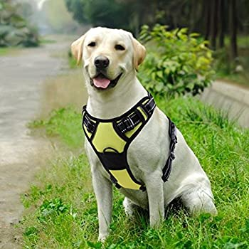 hunter dog harness how to put on