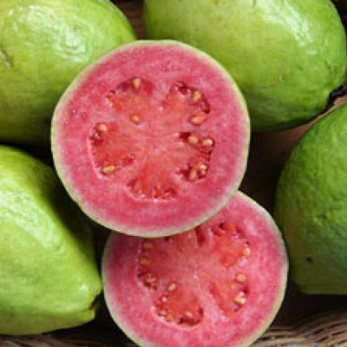 50 Dwarf Guava Seeds *Rare* *Exotic* *Organic* Psidium Cattleianum, Lemon Guava