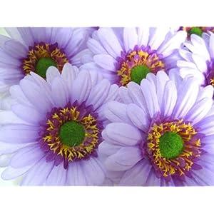 "(50) BIG Silk Purple Gerbera Daisy Flower Heads , Gerber Daisies - 3.5"" - Artificial Flowers Heads Fabric Floral Supplies Wholesale Lot for Wedding Flowers Accessories Make Bridal Hair Clips Headbands Dress 8"