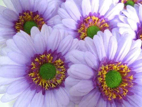 50 Big Silk Purple Gerbera Daisy Flower Heads Gerber Daisies