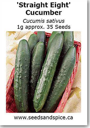 'Straight Eight' All Purpose Cucumber (Cucumis sativus) 1g approx 35 Seeds. 25g, 125g, 450g quantity options available (1g (35 Seeds)) Whish Seeds