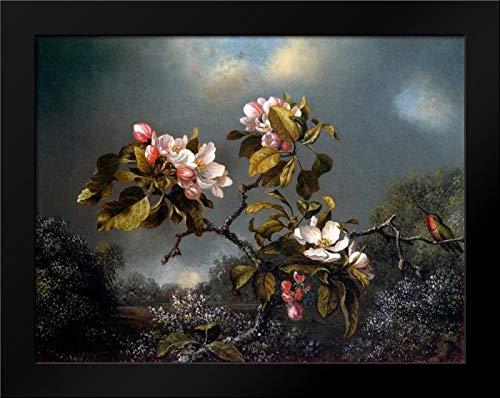 Apple Blossom and Hummingbird Framed Art Print by Heade, Martin Johnson