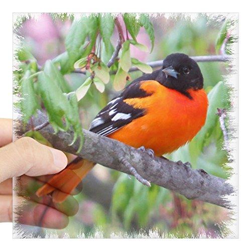 CafePress Baltimore Oriole Square Sticker 3