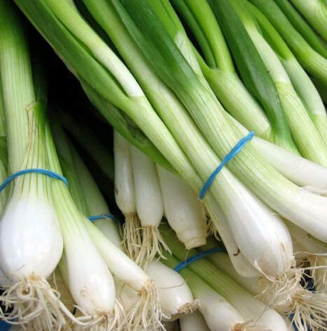 - Seeds Southport White Globe Bunching Onion Allium Get 500 Seeds #LC01YN